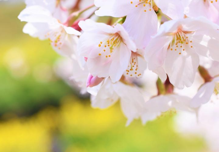 外壁塗装の色選びでお困りの方へ!日塗工の春らしい色をご紹介