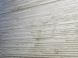 調布市柴崎にて外壁メンテナンス調査、塗膜劣化により藻が繁殖したサイディングにナノコンポジットWによる塗装工事をご提案